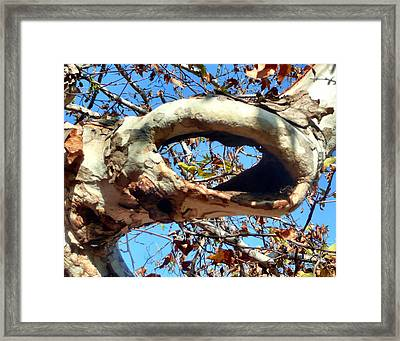 Window To The Sky Framed Print