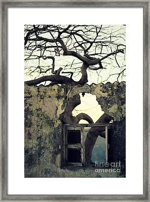 Window Framed Print by Vishakha Bhagat
