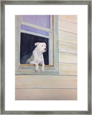 Window Watcher Framed Print by Mary Gehley
