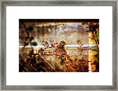 Window Wren Framed Print by Dan Quam