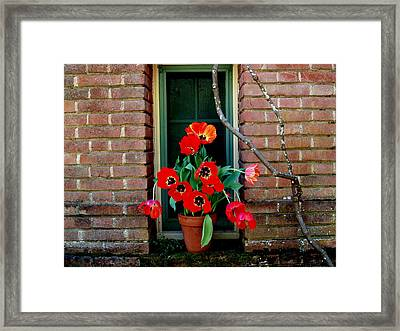 Windows Series - 4 Framed Print by Haleh Mahbod