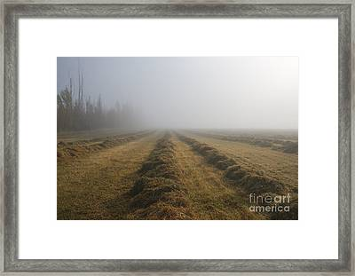 Windrows Framed Print by Mike  Dawson
