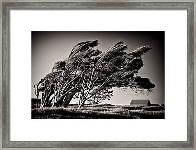 Windswept Framed Print by Dave Bowman