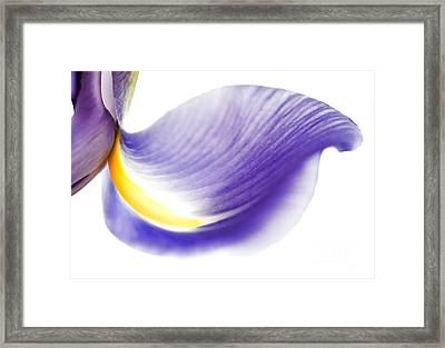 Windswept Framed Print by Deb Halloran