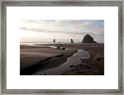 Windswept Framed Print by John Daly