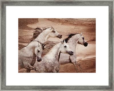 Windswept Framed Print by Melinda Hughes-Berland