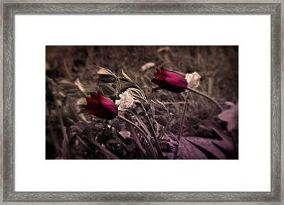 Windswept Passion Framed Print