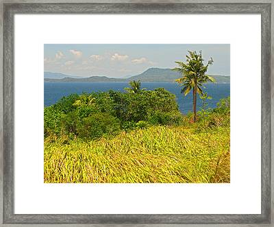 Windswept Framed Print by Pete Marchetto