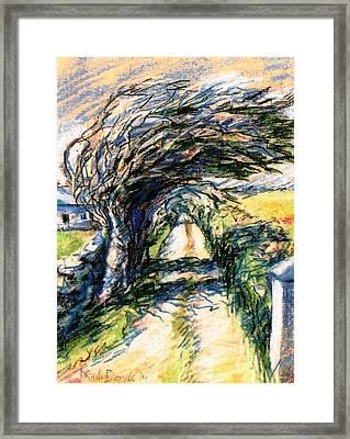 Windswept Tree On Aran Island Galway Ireland  Framed Print by Trudi Doyle