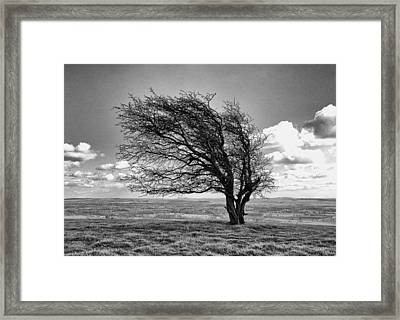 Framed Print featuring the photograph Windswept Tree On Knapp Hill by Paul Gulliver