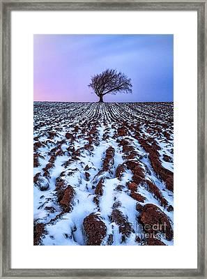 Windswept Tree Scotland Framed Print by John Farnan