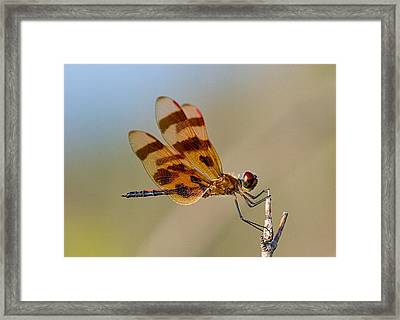 Windy Day Dragonfly Framed Print