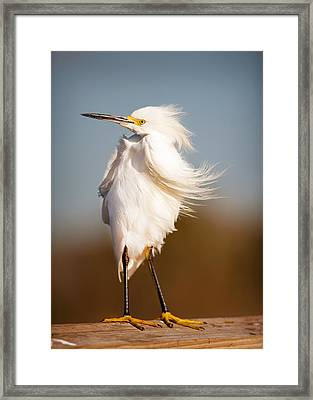 Windy Egret Framed Print by Tammy Smith