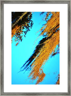 Windy Moss Framed Print