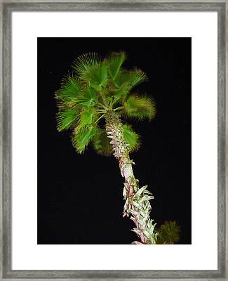 Windy Palm Tree Framed Print by Michel Mata