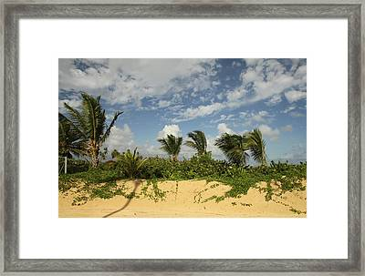 Windy Palms Framed Print