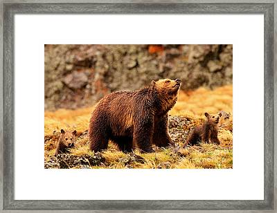 Framed Print featuring the photograph Windy Ridge by Aaron Whittemore