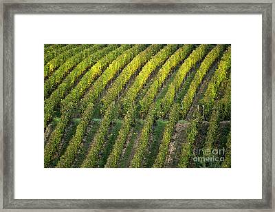Wine Acreage In Germany Framed Print by Heiko Koehrer-Wagner