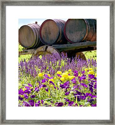 Wine Barrels At V. Sattui Napa Valley Framed Print by Michelle Wiarda