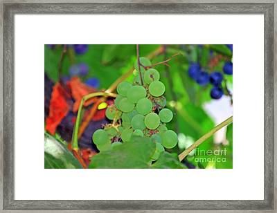 Wine Beginnings Framed Print