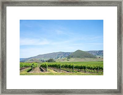 Wine Country Edna Valley Framed Print