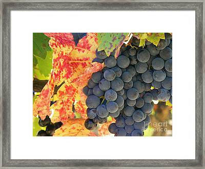Wine Country Framed Print by France  Art