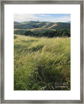 Wine Country Hills Framed Print