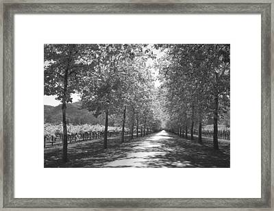 Wine Country Napa Black And White Framed Print
