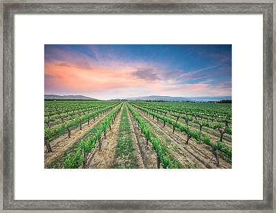 Wine Country Framed Print by Robert  Aycock