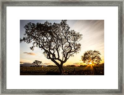 Wine Country Sunset Framed Print by Richard Cheski
