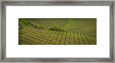 Wine Design Framed Print by Jean Noren