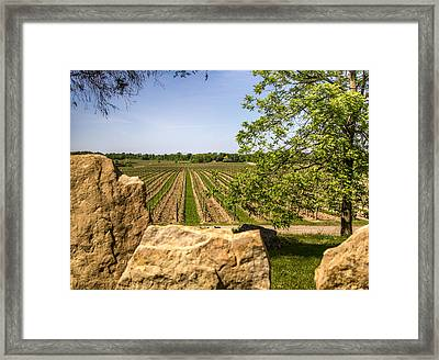 Wine Estate Ontario Framed Print by Nick Mares