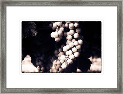 Wine Grapes - Toned Framed Print by Georgia Fowler