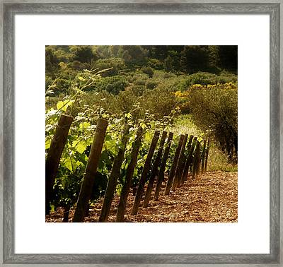 Wine Growing Pouring And Enjoying  Framed Print by Christine Burdine