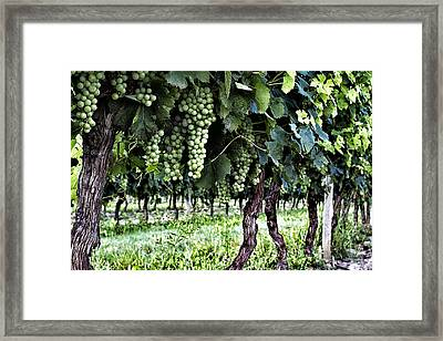 Wine Stages Framed Print by Georgia Fowler