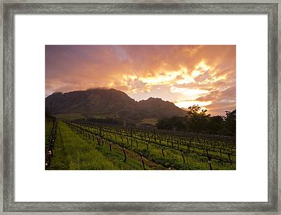 Wineland Sunrise Framed Print by Aaron Bedell