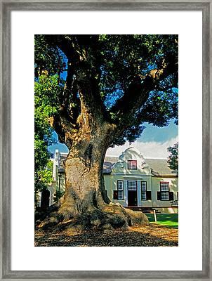 Winelands Manor Oak Framed Print