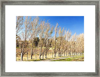 Framed Print featuring the photograph Winery by Yew Kwang