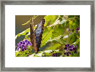 Wing And A Prayer Framed Print by Aimee L Maher Photography and Art Visit ALMGallerydotcom