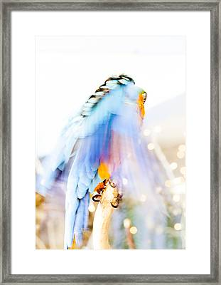 Wing Dream Framed Print