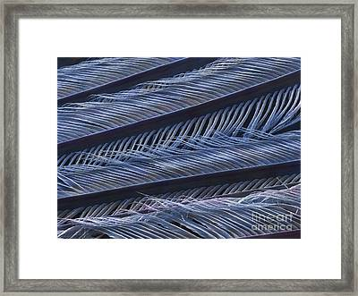 Wing Feather Detail Of A Swallow (sem) Framed Print