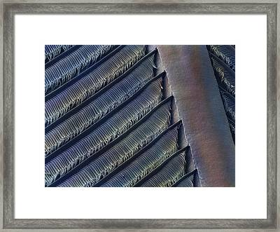 Wing Feather Detail Of Swallow Sem Framed Print