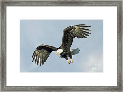 Wing Flare Framed Print by John Blumenkamp