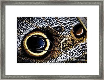Wing Of Owl Butterfly  Framed Print by Elena Elisseeva