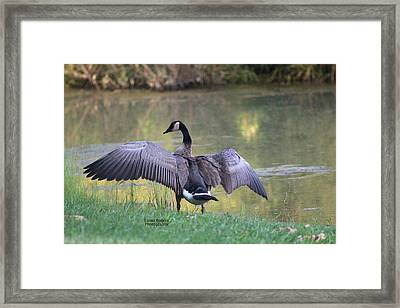 Framed Print featuring the photograph Wing Span by Lorna Rogers Photography