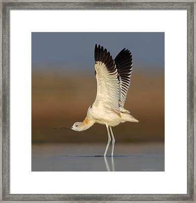 Wing Stretch Framed Print by Daniel Behm