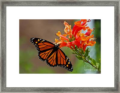 Winged Grace Framed Print