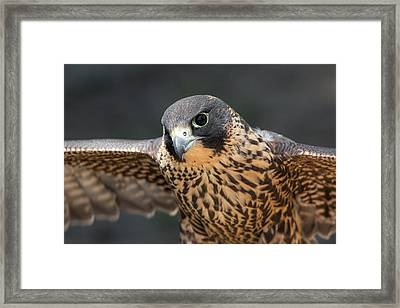 Winged Portrait Framed Print