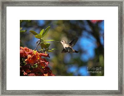 Winged Wonders Framed Print