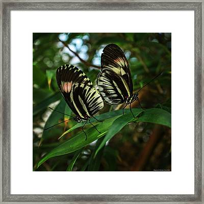 Wingmates Framed Print by Chrystyne Novack